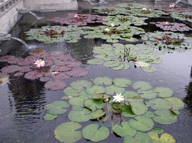 The lotus ponds at Chi Lin nunnery